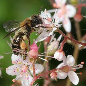 re juchu wir haben wildbienen nur welche wildbiene. Black Bedroom Furniture Sets. Home Design Ideas