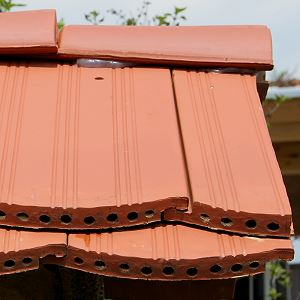 vögel dachfirst balken schutz
