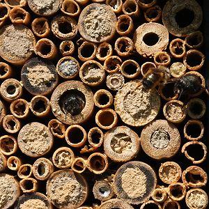 Bau einer Wildbienenwand bei wildbienen.de
